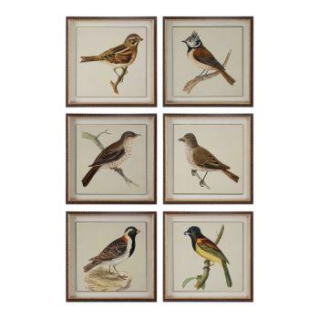 """Uttermost Spring Soldiers 15"""" Bird Prints in Dark Brown Frame (Set of 6)"""