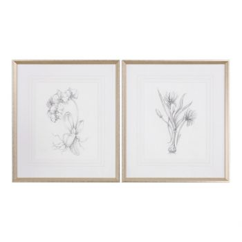 """Uttermost Botanical Sketches 32"""" Prints in Taupe Frame (Set of 2)"""