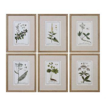 Uttermost Green Floral Botanical Study Prints in Gold Leaf Frame (S/6)