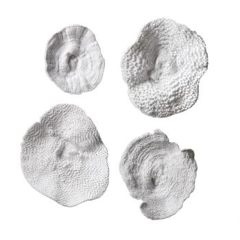 """Uttermost Sea Coral 13.5"""" Wall Art in Antique White (Set of 4)"""